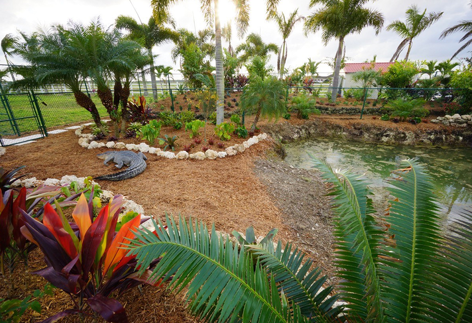 Premier Horticulture's Tree Service Gallery