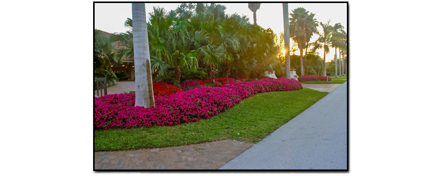 Landscaping miami landscape design landscaping and for Land design landscaping