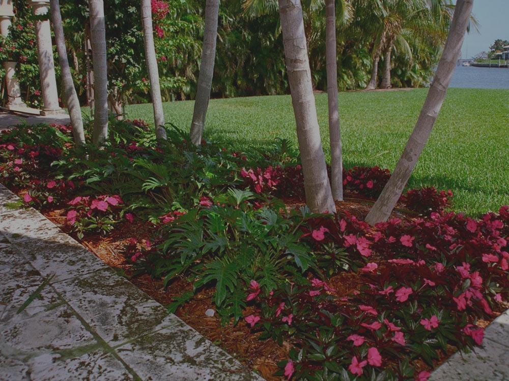 Coral Gables Lawn Pest Control
